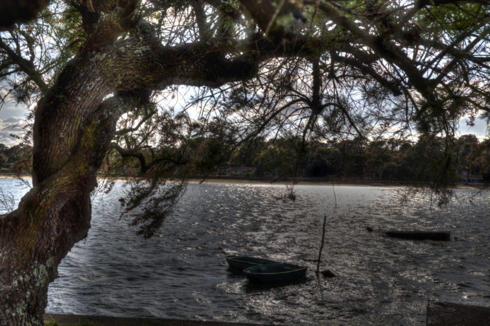 Tamaris au lac