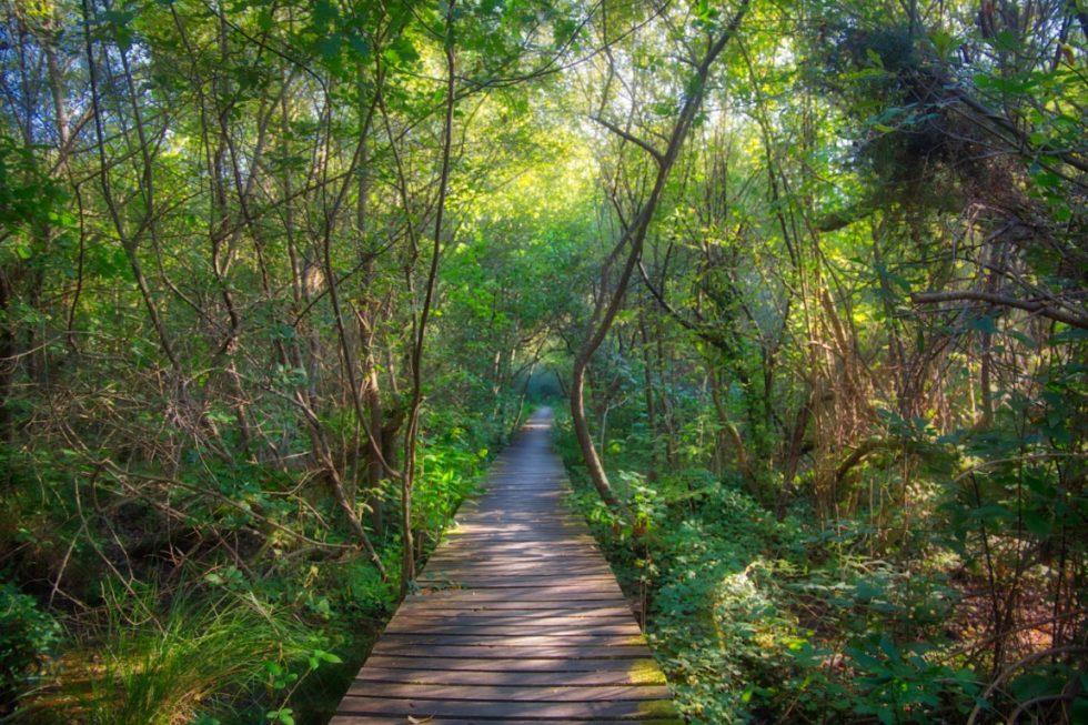Promenade à l'étang noir a Seignosse